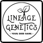 Lineage Genetics Cannabis Seeds