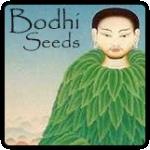 Bodhi Seeds Cannabis Seeds