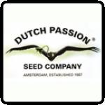 Dutch Passion Cannabis Seeds