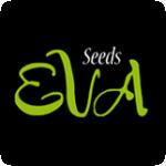 Eva  Cannabis  Seeds