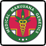 Medical Marijuana Genetics Cannabis Seeds