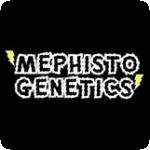 Mephisto Genetics Cannabis Seeds