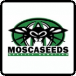 Mosca Seeds Cannabis Seeds