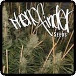 Pheno Finder Seeds Cannabis Seeds