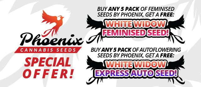 Offer  Banner  Phoenix  Cannabis  Seeds