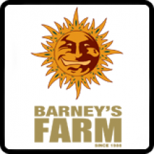 Barneys  Farm  Amsterdam  Breeder