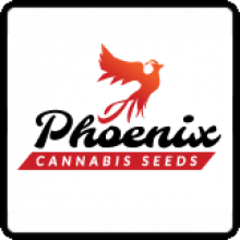 Phoenix Cannabis Seeds