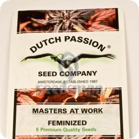 Brainstorm Feminised Seeds