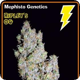 Ripley's OG Auto Feminised Seeds
