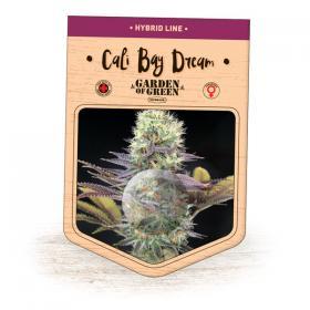 Cali Bay Dream Feminised Seeds