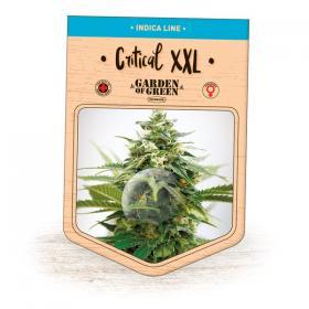 Critical XXL Feminised Seeds
