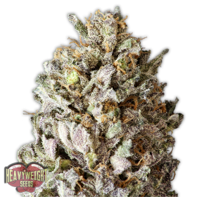 Diesel Drift Feminised Seeds