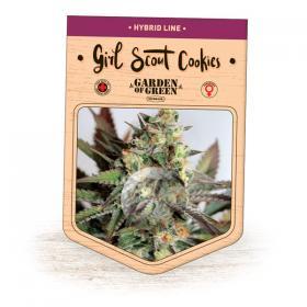 Girl Scout Cookies Feminised Seeds