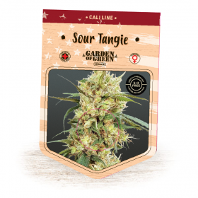 Sour Tangie Feminised Seeds