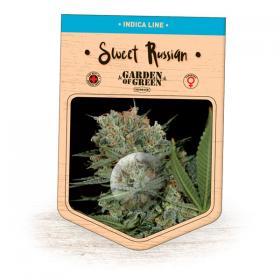 Sweet Russian Feminised Seeds