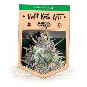 Violet Kush AUTO Feminised Seeds
