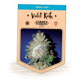 Violet Kush Feminised Seeds