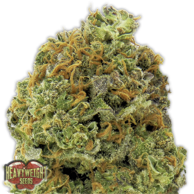 Wipeout Express Auto Feminised Seeds