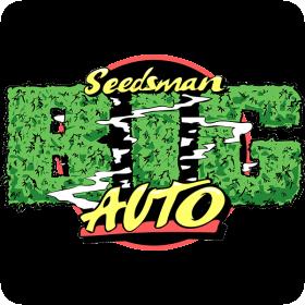 B  I  G   Auto  Feminised  Cannabis  Seeds  Cannabis  Seedsman