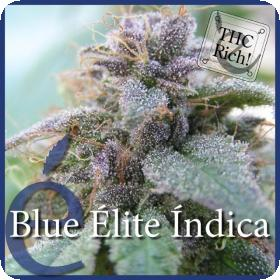 Blue Elite Indica Feminised Seeds