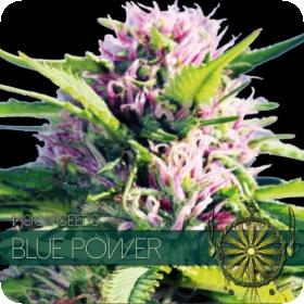 Blue Power Feminised Seeds