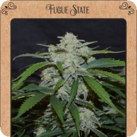Fugue State Auto Feminised Seeds