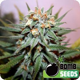 Hash Bomb Regular Seeds
