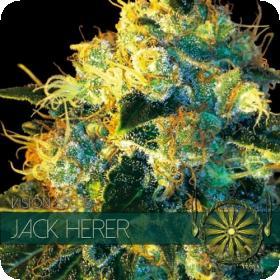 Jack Herer Feminised Seeds