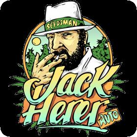 Jack  Herrer  Auto  Feminised  Cannabis  Seeds  Cannabis  Seedsman