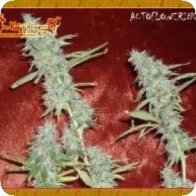 Krippleberry Auto Feminised Seeds