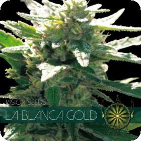 La Blanca Gold Feminised Seeds