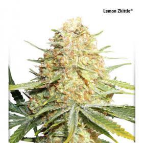 Lemon Zkittle Auto Feminised Seeds