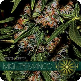 Mighty Mango Bud Feminised Seeds
