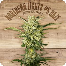Northern Lights #5 Haze Feminised Seeds