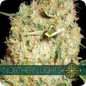 Northern Lights Feminised Seeds