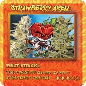 Strawberry Akeil Feminised Seeds