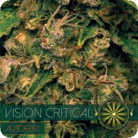 Vision Critical Auto Feminised Seeds