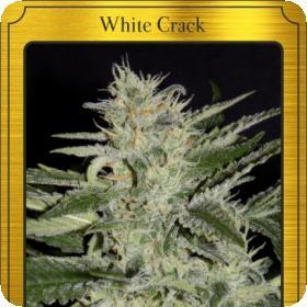 White Crack Auto Feminised Seeds