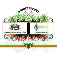 The Vault One Love Joint Autoflower Tshirt