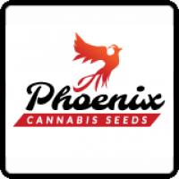 Phoenix Cannabis Seeds