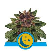 Purplematic CBD Auto Feminised Seeds