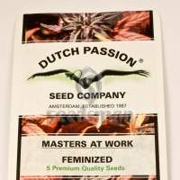 Brainstorm Feminised Seeds