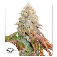 Banana Blaze Auto Feminised Seeds