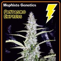 Fantasmo Express Auto Feminised Seeds