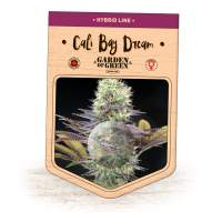 Cali Bay Dream Feminised Seeds