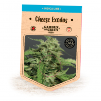 Cheese Exodus Feminised Seeds