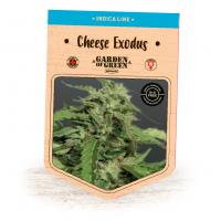 Cheese  Exodus  Feminised  Cannabis  Seeds  Jpg