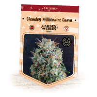 Chemdog Millionaire Guava Feminised Seeds