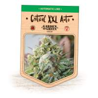 Critical XXL Auto Feminised Seeds