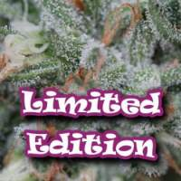 Dark Cookie Feminised Seeds (Limited Edition) Seeds